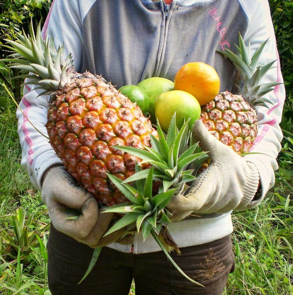 Los frutos de la granja