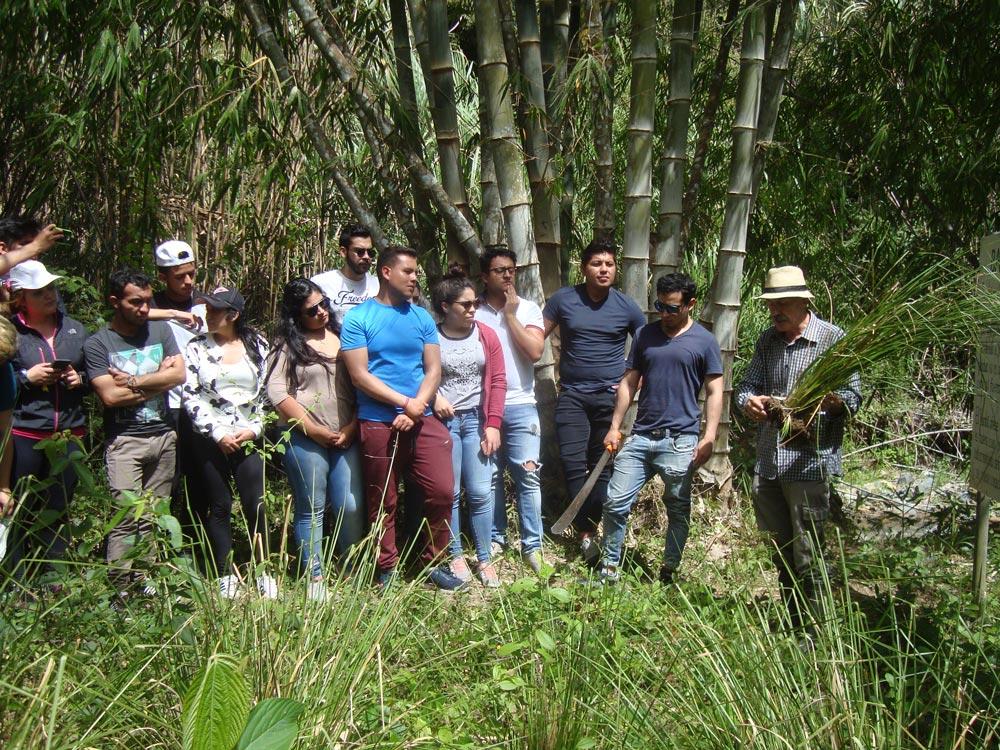 Bambú Ecuador, un grupo de estudiantes frente a Dendrocalamus asper en Parque Bambú