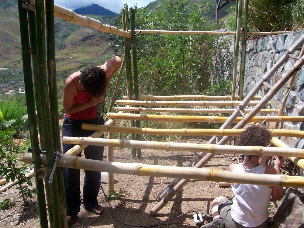 Bamboo Ecuador – Parque Bambú – Bambusa tulda