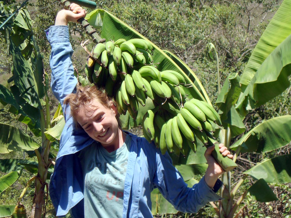 An abundance of bananas in Parque Bambú